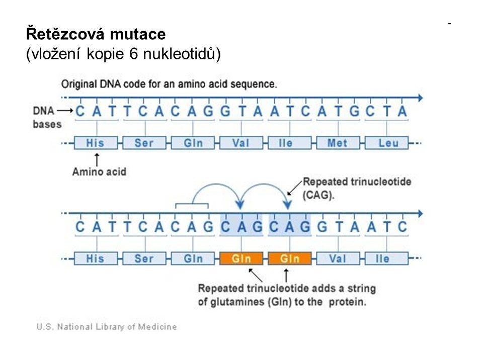 Řetězcová mutace (vložení kopie 6 nukleotidů)