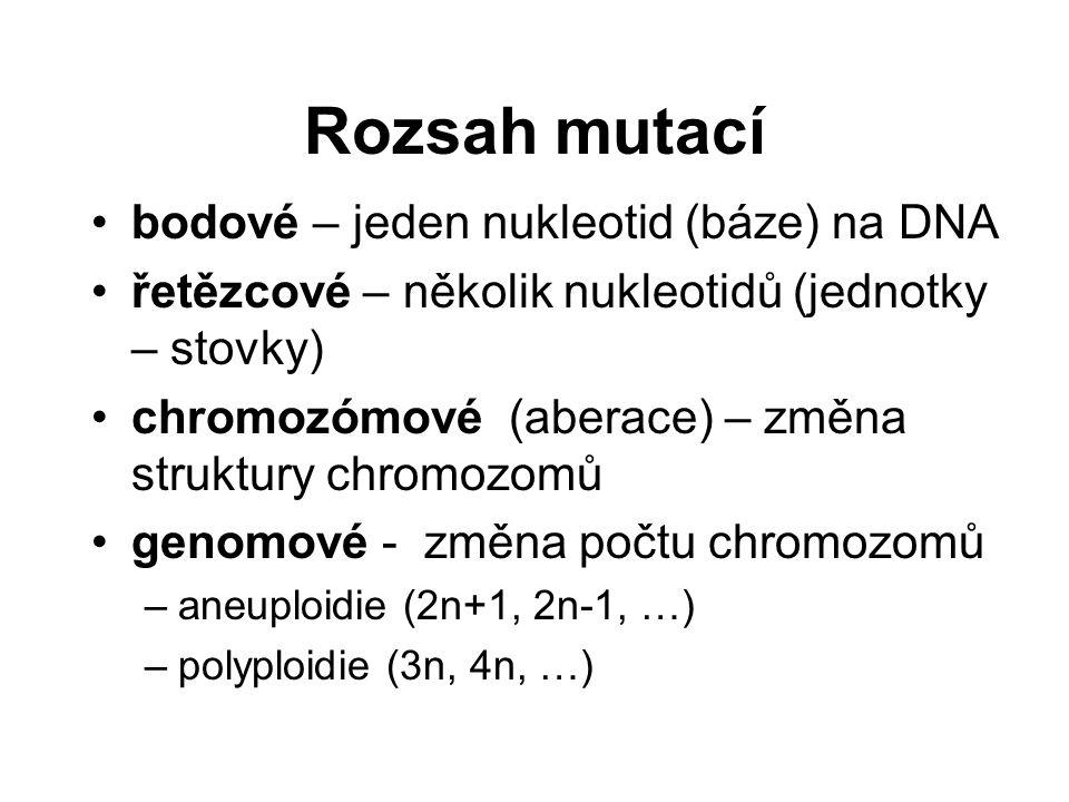 Rozsah mutací bodové – jeden nukleotid (báze) na DNA řetězcové – několik nukleotidů (jednotky – stovky) chromozómové (aberace) – změna struktury chromozomů genomové - změna počtu chromozomů –aneuploidie (2n+1, 2n-1, …) –polyploidie (3n, 4n, …)