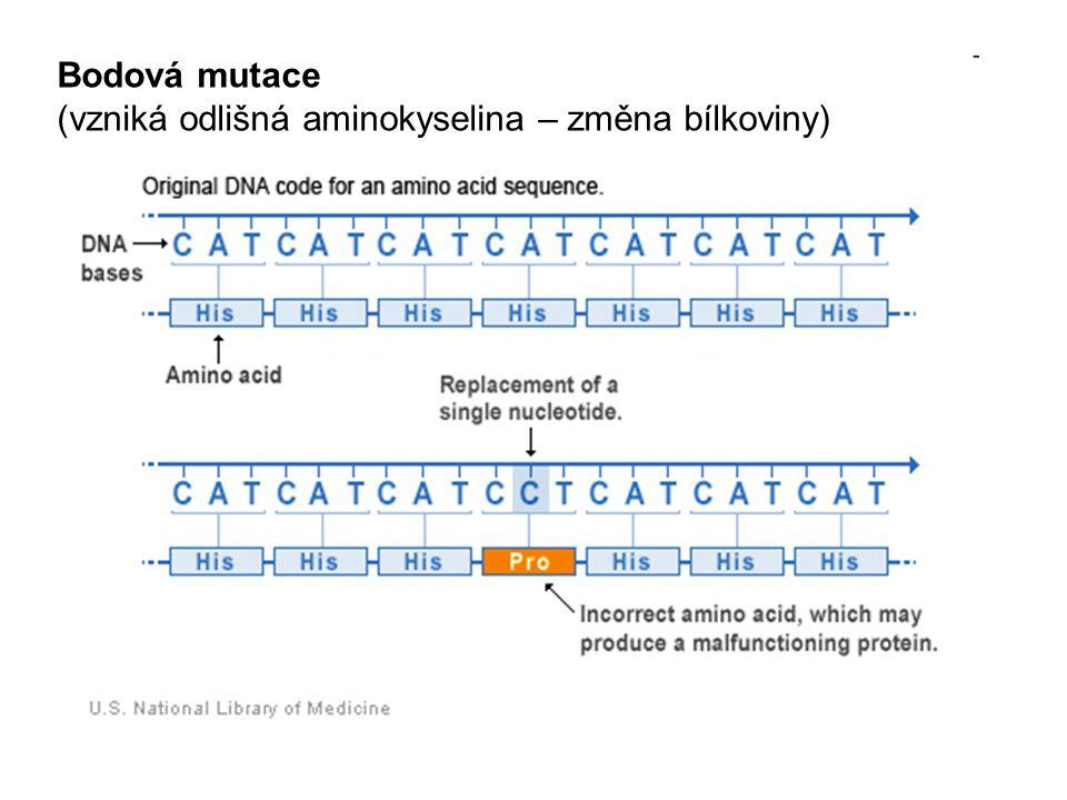 Základní řetězec: DNATACGTGATACCAAAGTAGACT mRNAAUGCACUAUGGUUUCAUCUGA AAmethistyrglypheile(stop) Mutace bez změny aminokyseliny DNATACGTGATACCGAAGTAGACT mRNAAUGCACUAUGGCUUCAUCUGA AAmethistyrglypheile(stop) Mutace s nepodstatnou změnou aminokyseliny DNATACGTGATACGACGAAAGTAGACT mRNAAUGCACUAUGCUGCUUUCAUCUGA AAmethistyralapheile(stop) Mutace s podstatnou změnou aminokyseliny DNATACGTGATAGCAAAGTAGACT mRNAAUGCACUAUCGUUUCAUCUGA AAmethistyrargpheile(stop)