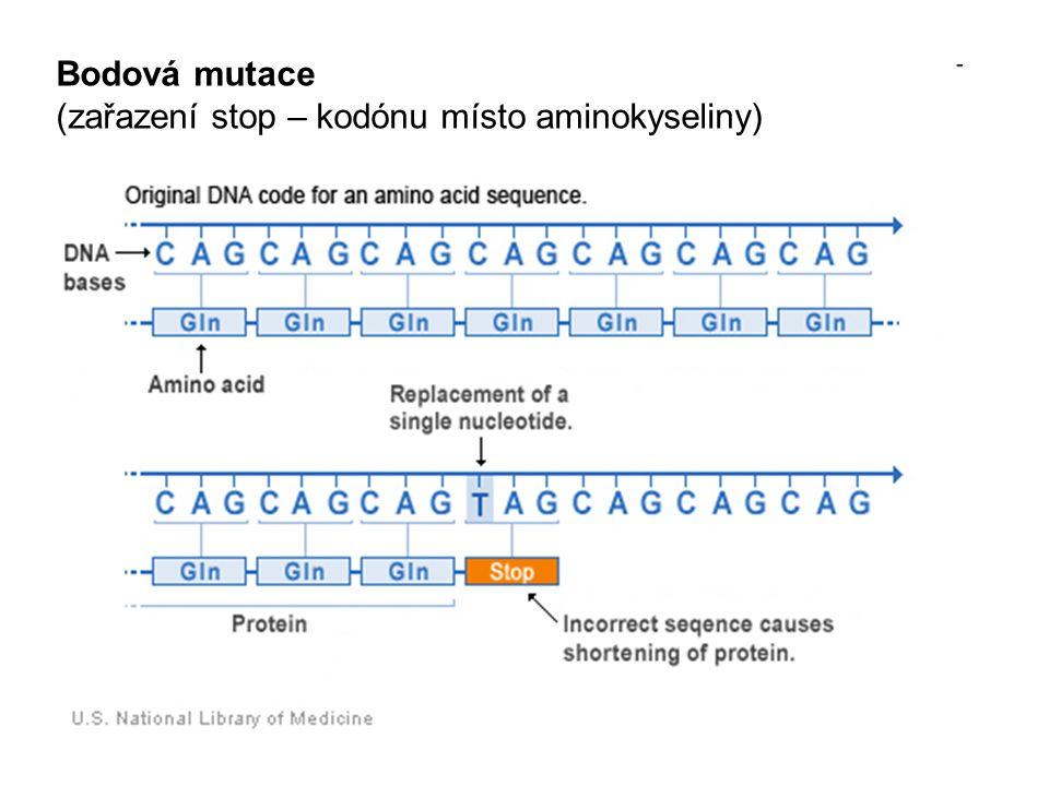 Bodová mutace (zařazení stop – kodónu místo aminokyseliny)