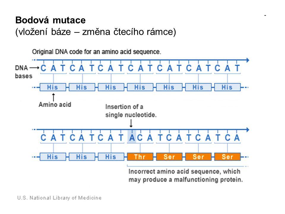 Bodová mutace (vložení báze – změna čtecího rámce)