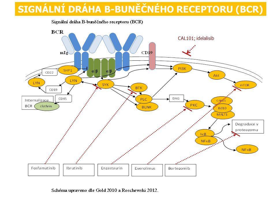 SIGNÁLNÍ DRÁHA B-BUNĚČNÉHO RECEPTORU (BCR) CAL101; idelalisib