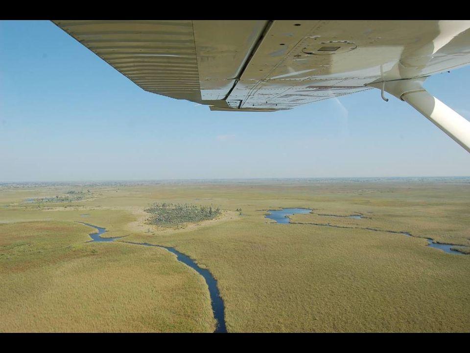 Les papyrů v deltě Okavanga. Hloubka vody nepřesahuje 50 cm.