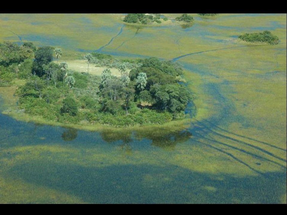 Zatopená plocha pokrývá asi 22,000 km ² severní Botswany.