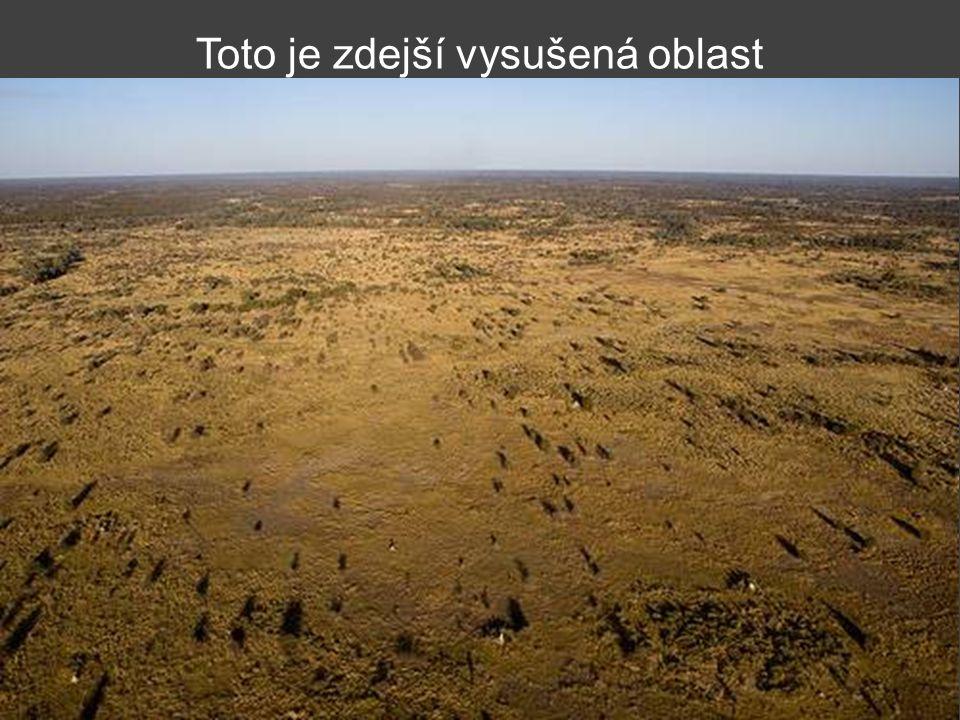 Okavango River, na rozdíl od většiny vodních toků, teče do pouště.