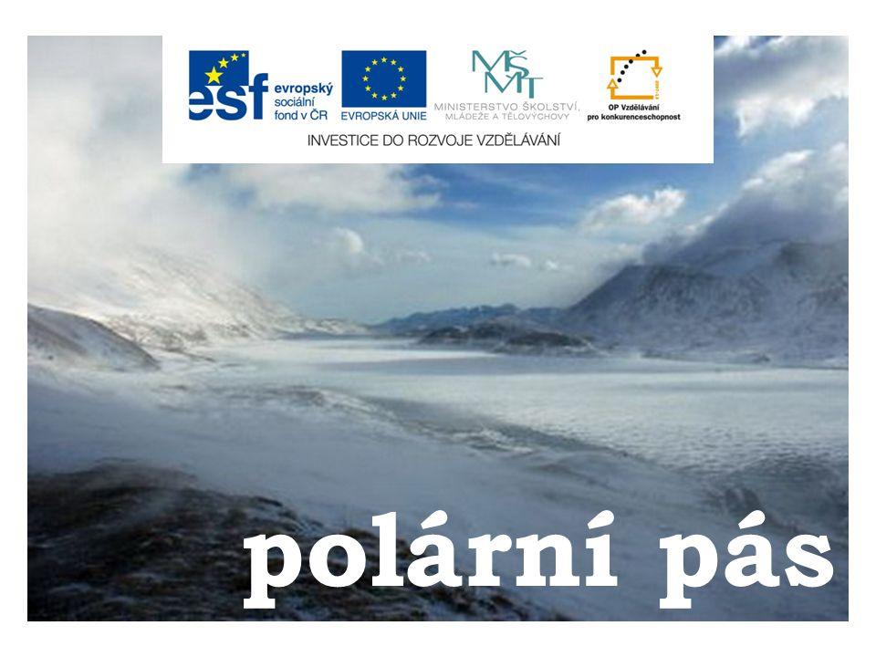 Antarktida  oblast jižní polární pustiny  kruté podnební podmínky – málo organismů je schopno přežít