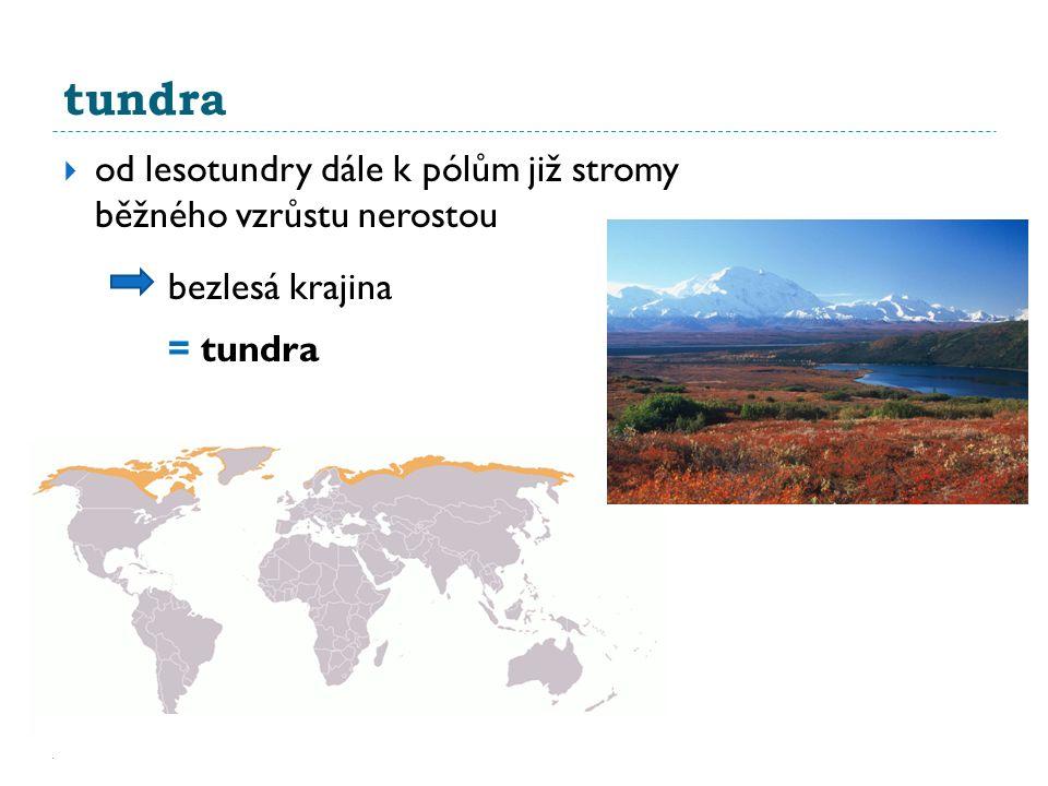 tundra  od lesotundry dále k pólům již stromy běžného vzrůstu nerostou bezlesá krajina = tundra