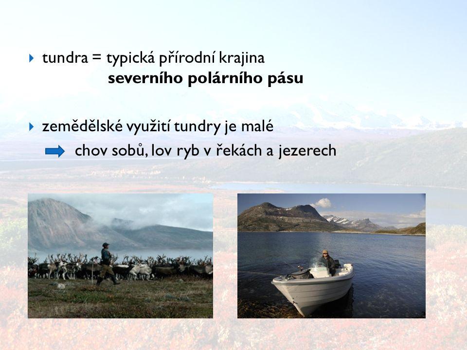  zvířata Antarktidy žijí pouze na pobřeží – - potrava v moři  plejtvák obrovský, tuleni, rypouši, albatros stěhovavý, tučňáci, chaluha velká (pták), krill