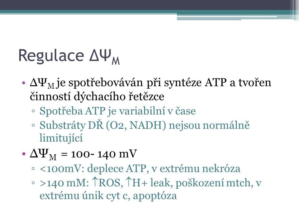 Regulace ΔΨ M ΔΨ M je spotřebováván při syntéze ATP a tvořen činností dýchacího řetězce ▫Spotřeba ATP je variabilní v čase ▫Substráty DŘ (O2, NADH) nejsou normálně limitující ΔΨ M = 100- 140 mV ▫<100mV: deplece ATP, v extrému nekróza ▫>140 mM:  ROS,  H+ leak, poškození mtch, v extrému únik cyt c, apoptóza