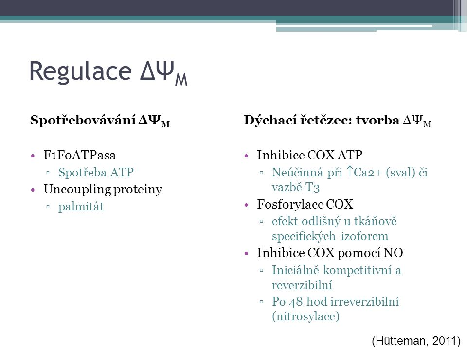 Regulace ΔΨ M Dýchací řetězec: tvorba ΔΨ M Inhibice COX ATP ▫Neúčinná při  Ca2+ (sval) či vazbě T3 Fosforylace COX ▫efekt odlišný u tkáňově specifických izoforem Inhibice COX pomocí NO ▫Iniciálně kompetitivní a reverzibilní ▫Po 48 hod irreverzibilní (nitrosylace) Spotřebovávání ΔΨ M F1FoATPasa ▫Spotřeba ATP Uncoupling proteiny ▫palmitát (Hütteman, 2011)