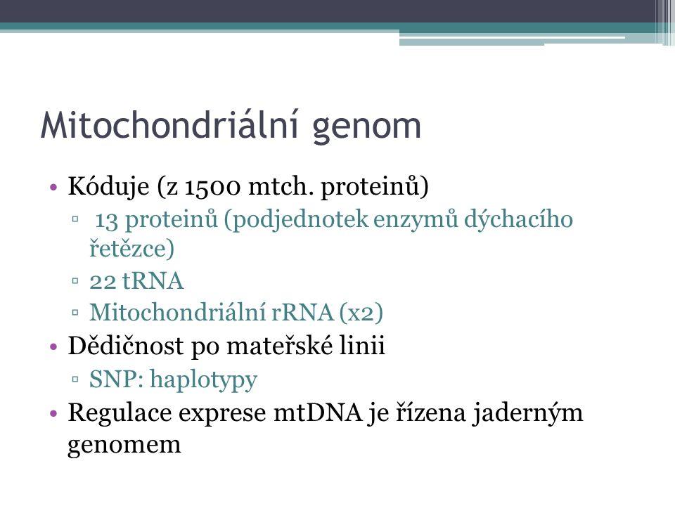 Mitochondriální genom Kóduje (z 1500 mtch. proteinů) ▫ 13 proteinů (podjednotek enzymů dýchacího řetězce) ▫22 tRNA ▫Mitochondriální rRNA (x2) Dědičnos