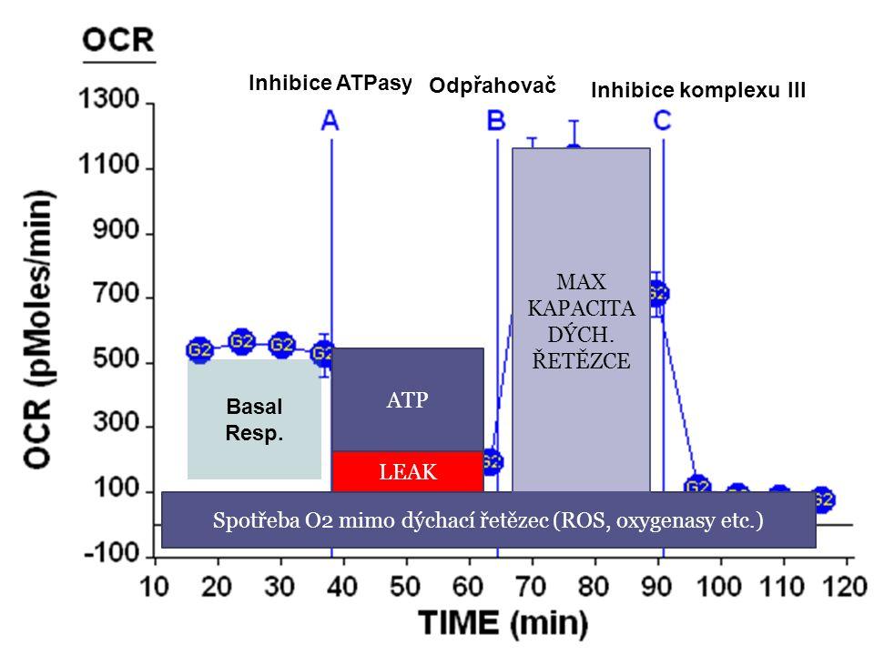 Basal Resp. Inhibice ATPasy Odpřahovač Inhibice komplexu III Spotřeba O2 mimo dýchací řetězec (ROS, oxygenasy etc.) ATP LEAK MAX KAPACITA DÝCH. ŘETĚZC