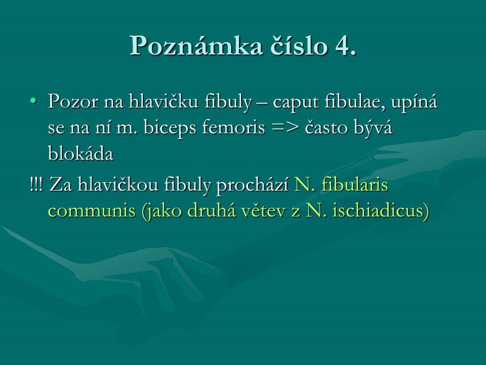 Poznámka číslo 4. Pozor na hlavičku fibuly – caput fibulae, upíná se na ní m. biceps femoris => často bývá blokádaPozor na hlavičku fibuly – caput fib