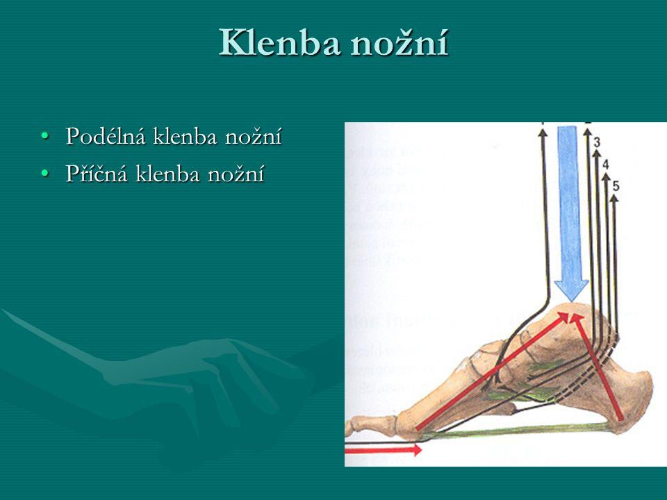 Klenba nožní Podélná klenba nožníPodélná klenba nožní Příčná klenba nožníPříčná klenba nožní
