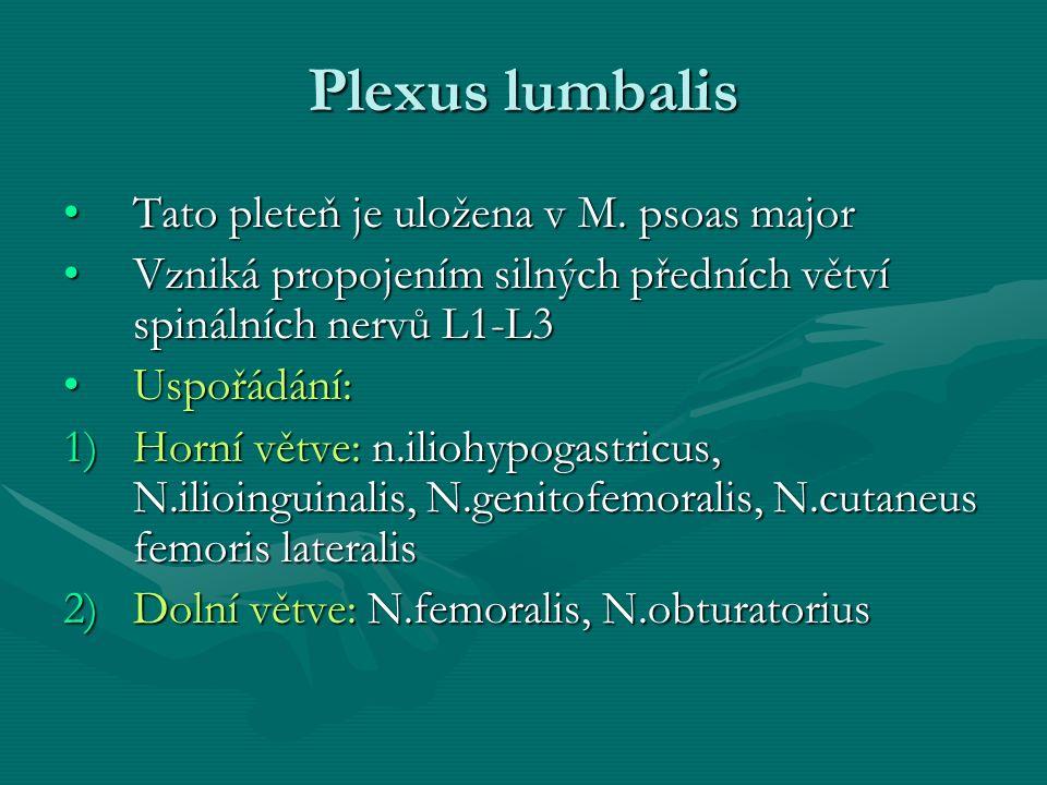 Plexus lumbalis Tato pleteň je uložena v M. psoas majorTato pleteň je uložena v M. psoas major Vzniká propojením silných předních větví spinálních ner
