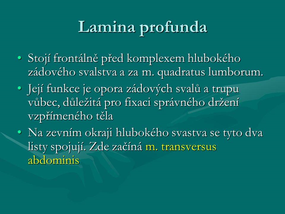 Lamina profunda Stojí frontálně před komplexem hlubokého zádového svalstva a za m. quadratus lumborum.Stojí frontálně před komplexem hlubokého zádovéh