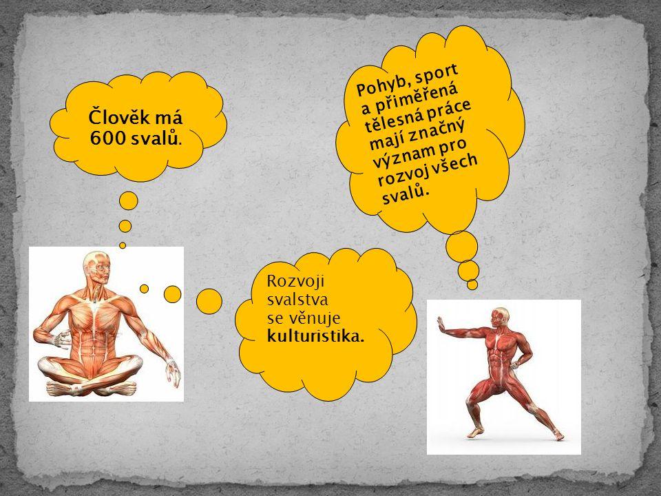 Člověk má 600 svalů.