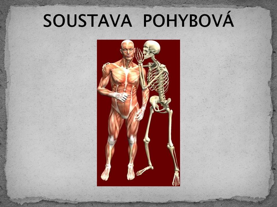 SOUSTAVA POHYBOVÁ