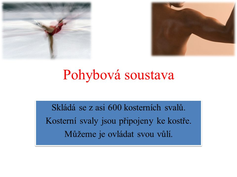 Svaly horní končetiny - deltový sval – pro pohyb v ramenním kloubu - dvojhlavý a trojhlavý pažní sval - ohybače a natahovače prstů a ruky uložené na předloktí - svaly ruky – hluboké dlaňové svaly, zajištění opozice palce - deltový sval – pro pohyb v ramenním kloubu - dvojhlavý a trojhlavý pažní sval - ohybače a natahovače prstů a ruky uložené na předloktí - svaly ruky – hluboké dlaňové svaly, zajištění opozice palce