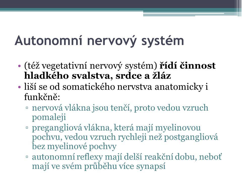 Autonomní nervový systém (též vegetativní nervový systém) řídí činnost hladkého svalstva, srdce a žláz liší se od somatického nervstva anatomicky i funkčně: ▫nervová vlákna jsou tenčí, proto vedou vzruch pomaleji ▫pregangliová vlákna, která mají myelinovou pochvu, vedou vzruch rychleji než postgangliová bez myelinové pochvy ▫autonomní reflexy mají delší reakční dobu, neboť mají ve svém průběhu více synapsí