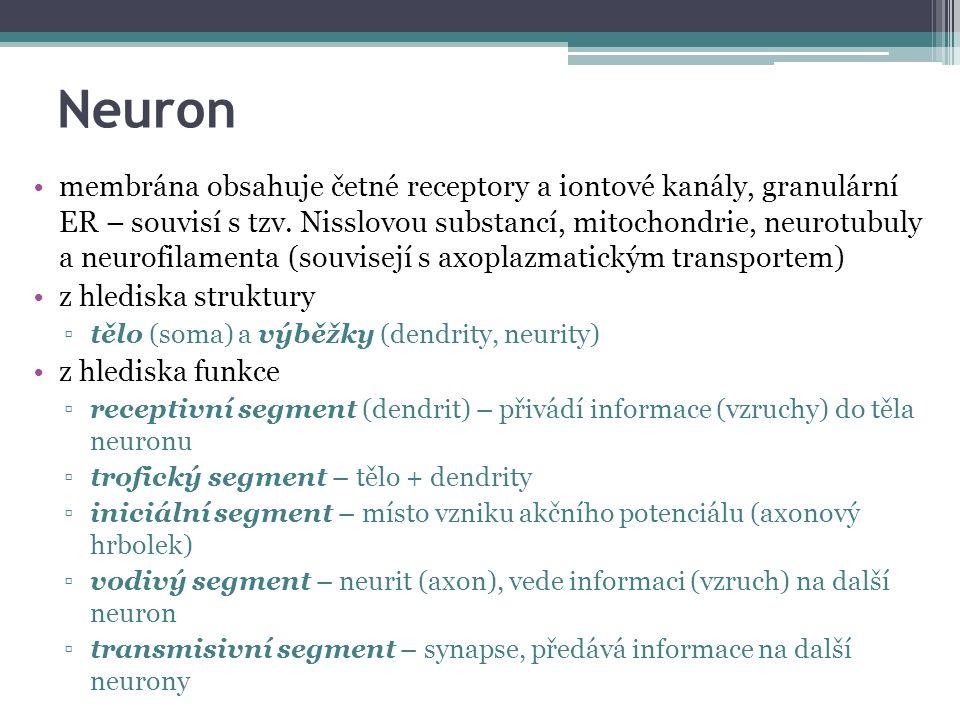Neuron membrána obsahuje četné receptory a iontové kanály, granulární ER – souvisí s tzv.