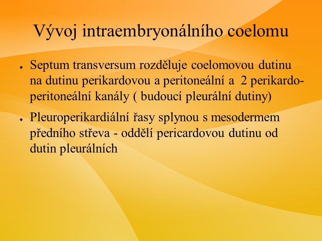 Vývoj intraembryonálního coelomu ● Septum transversum rozděluje coelomovou dutinu na dutinu perikardovou a peritoneální a 2 perikardo- peritoneální kanály ( budoucí pleurální dutiny) ● Pleuroperikardiální řasy splynou s mesodermem předního střeva - oddělí pericardovou dutinu od dutin pleurálních
