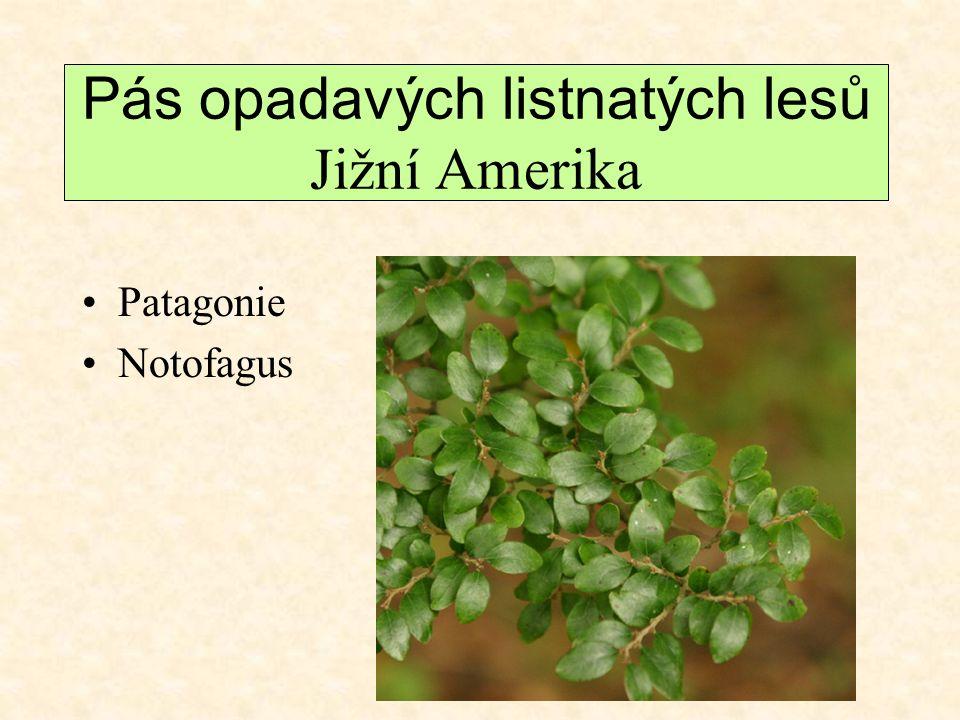 Pás opadavých listnatých lesů Jižní Amerika Patagonie Notofagus