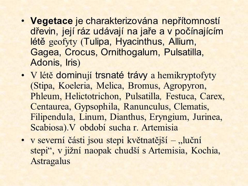 Vegetace je charakterizována nepřítomností dřevin, její ráz udávají na jaře a v počínajícím létě geofyty ( Tulipa, Hyacinthus, Allium, Gagea, Crocus, Ornithogalum, Pulsatilla, Adonis, Iris ) V létě domin ují trsnaté trávy a hemikryptofyty (Stipa, Koeleria, Melica, Bromus, Agropyron, Phleum, Helictotrichon, Pulsatilla, Festuca, Carex, Centaurea, Gypsophila, Ranunculus, Clematis, Filipendula, Linum, Dianthus, Eryngium, Jurinea, Scabiosa).V období sucha r.