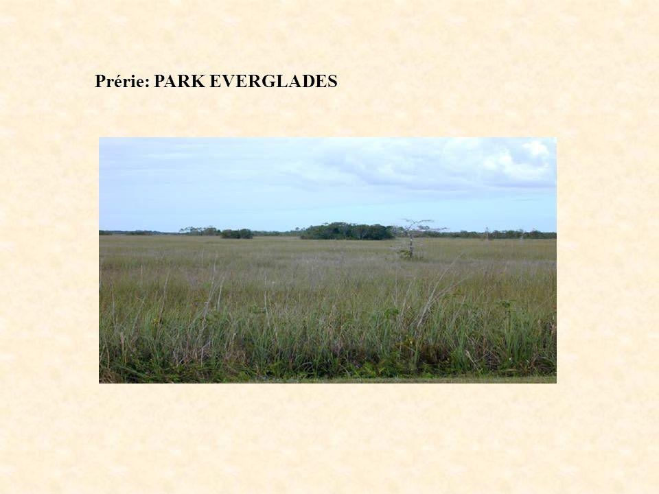 Prérie: PARK EVERGLADES