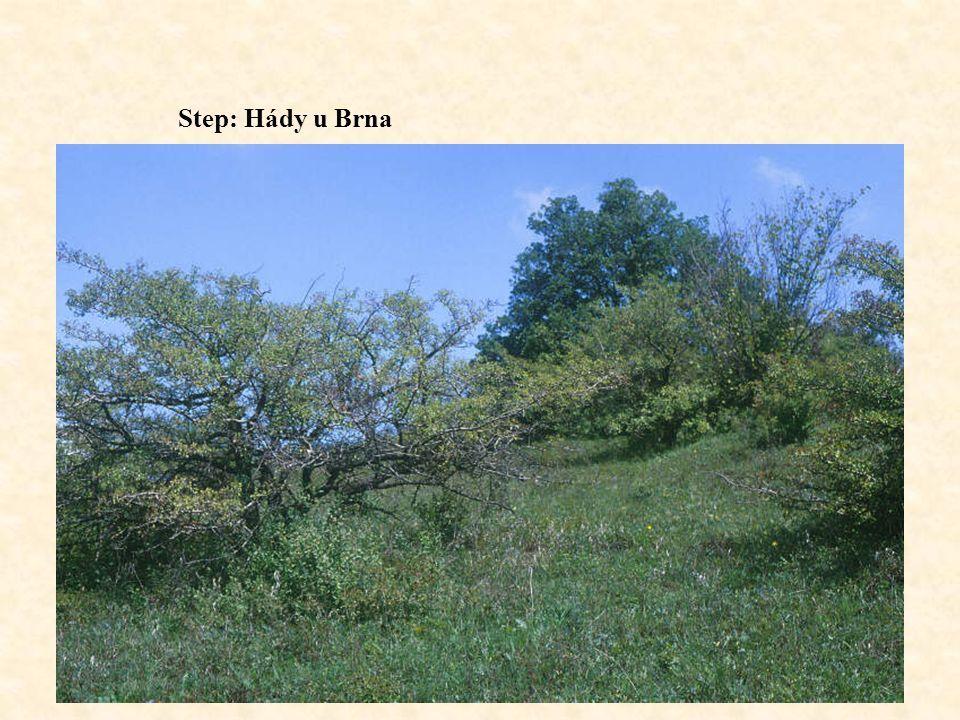 Step: Hády u Brna