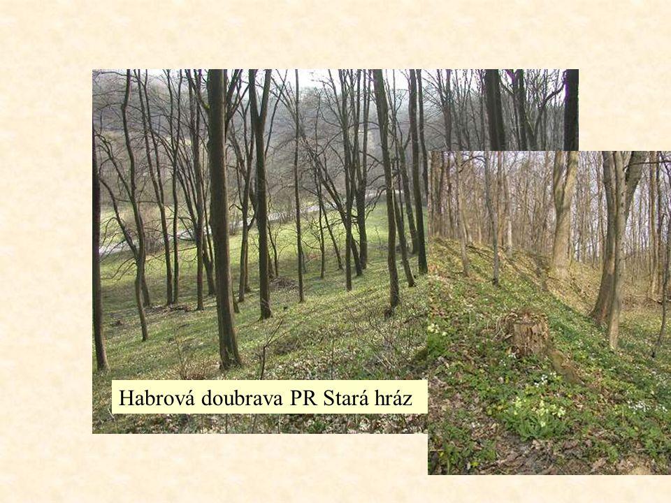 Lesostepi na okrajích stepí s příznivějším vodním režimem střídají se zde travinné porosty s listnatými lesy dlouhodobě ovlivnění člověkem – vypalování, vypásání, mnohde přeměněny v pole mozaikovitě se střídá les a step, rozhraní mezi nimi je ostré les má podrost lesních druhů nikoliv stepních, a je na místech chráněných nebo vlhkostně příznivých (severní svahy) v Evropě – doubravy, na Sibiři – jehličnatý borový, modřínový nebo i smrkový Lužní lesy ve stepích – azonální