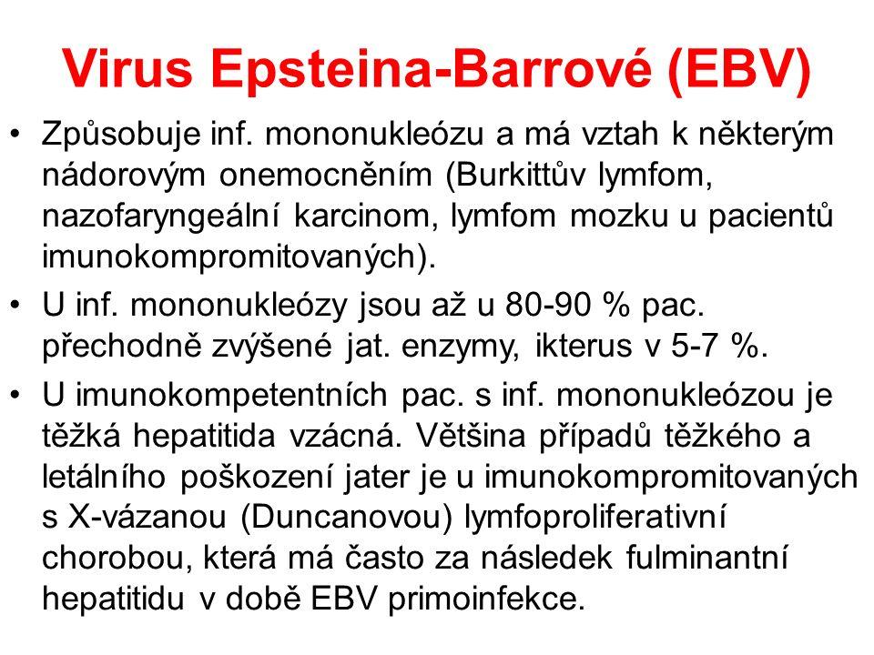 Virus Epsteina-Barrové (EBV) Způsobuje inf.