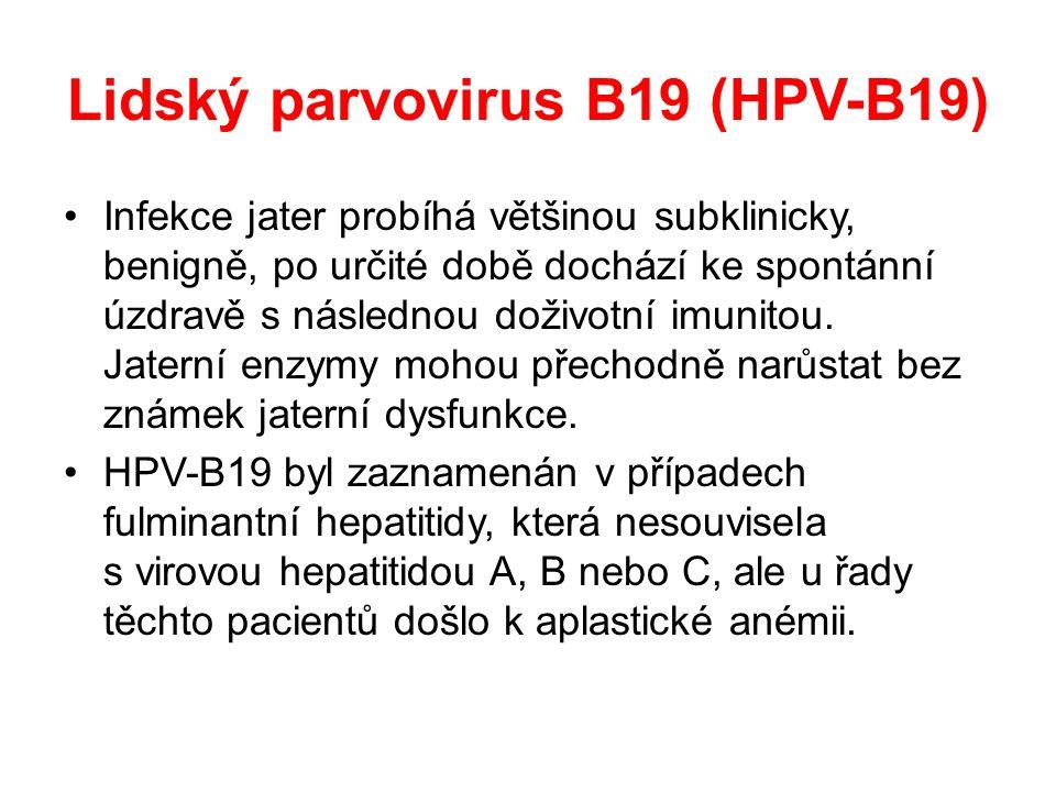 Lidský parvovirus B19 (HPV-B19) Infekce jater probíhá většinou subklinicky, benigně, po určité době dochází ke spontánní úzdravě s následnou doživotní imunitou.