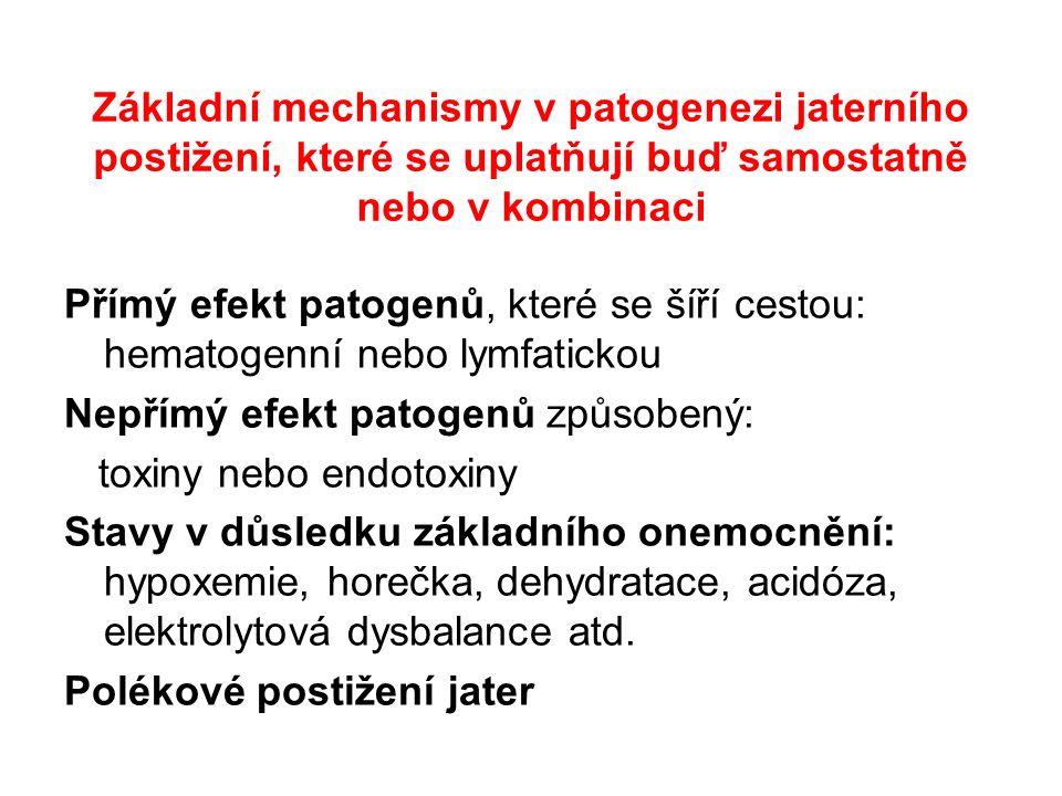 Základní mechanismy v patogenezi jaterního postižení, které se uplatňují buď samostatně nebo v kombinaci Přímý efekt patogenů, které se šíří cestou: hematogenní nebo lymfatickou Nepřímý efekt patogenů způsobený: toxiny nebo endotoxiny Stavy v důsledku základního onemocnění: hypoxemie, horečka, dehydratace, acidóza, elektrolytová dysbalance atd.