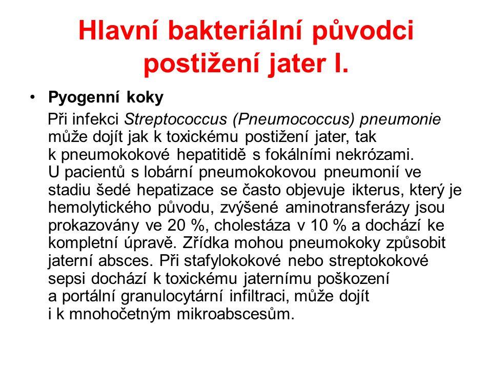 Hlavní bakteriální původci postižení jater II.