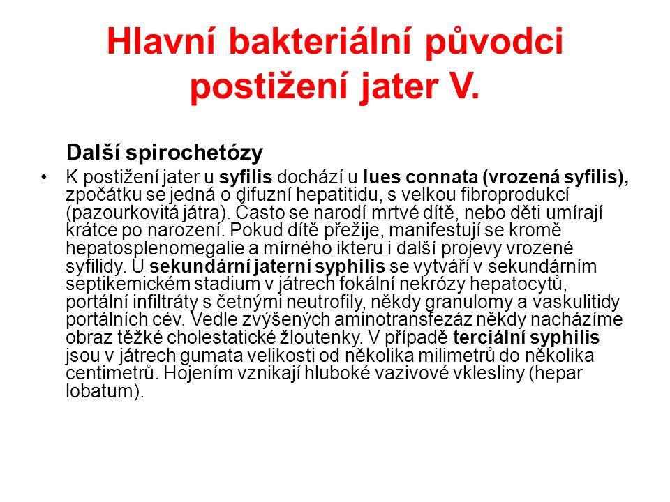 Hlavní bakteriální původci postižení jater VI.