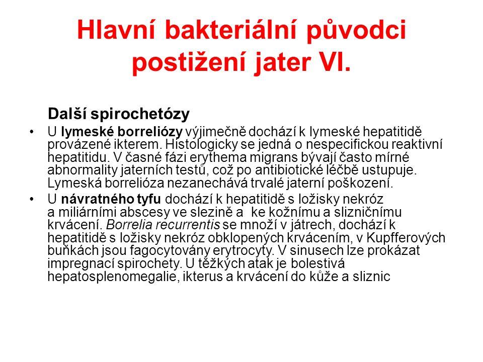 Hlavní bakteriální původci postižení jater VII.