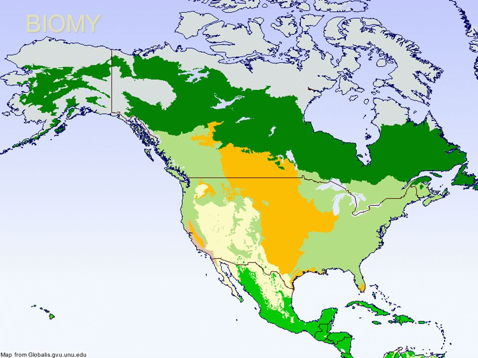 REGIONÁLNÍ GEOGRAFIE AMERIKY Biogeografie