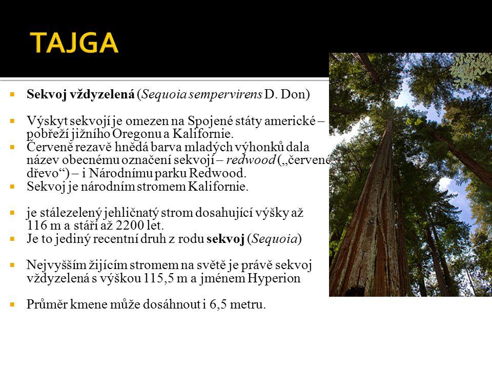  Sekvoj vždyzelená (Sequoia sempervirens D.