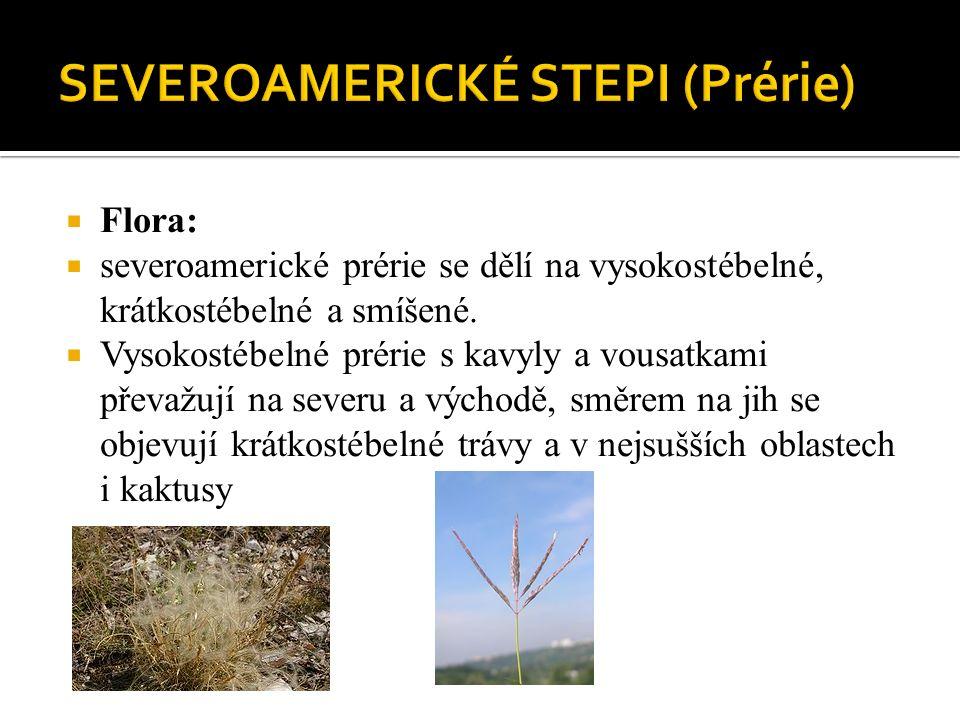  Flora:  severoamerické prérie se dělí na vysokostébelné, krátkostébelné a smíšené.