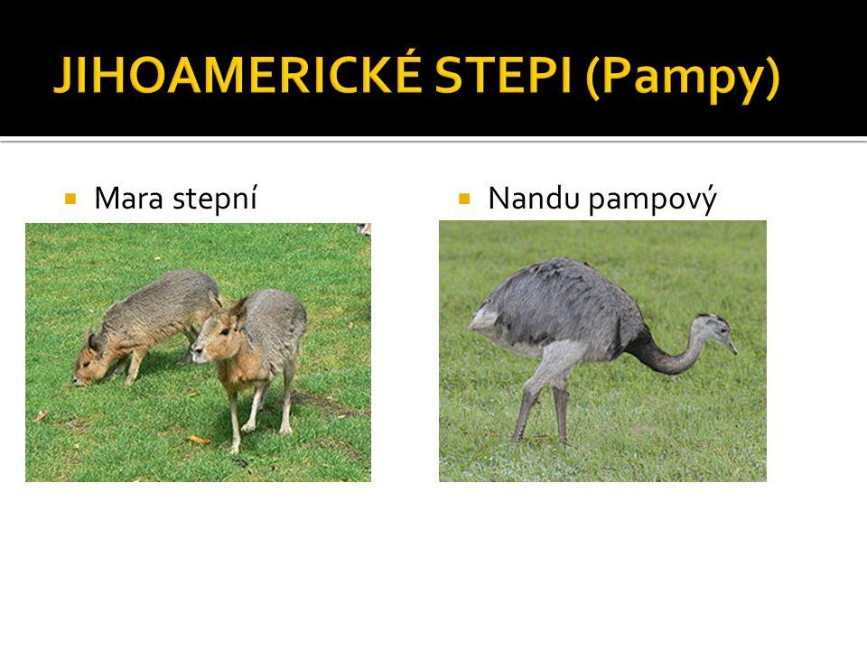  Mara stepní  Nandu pampový
