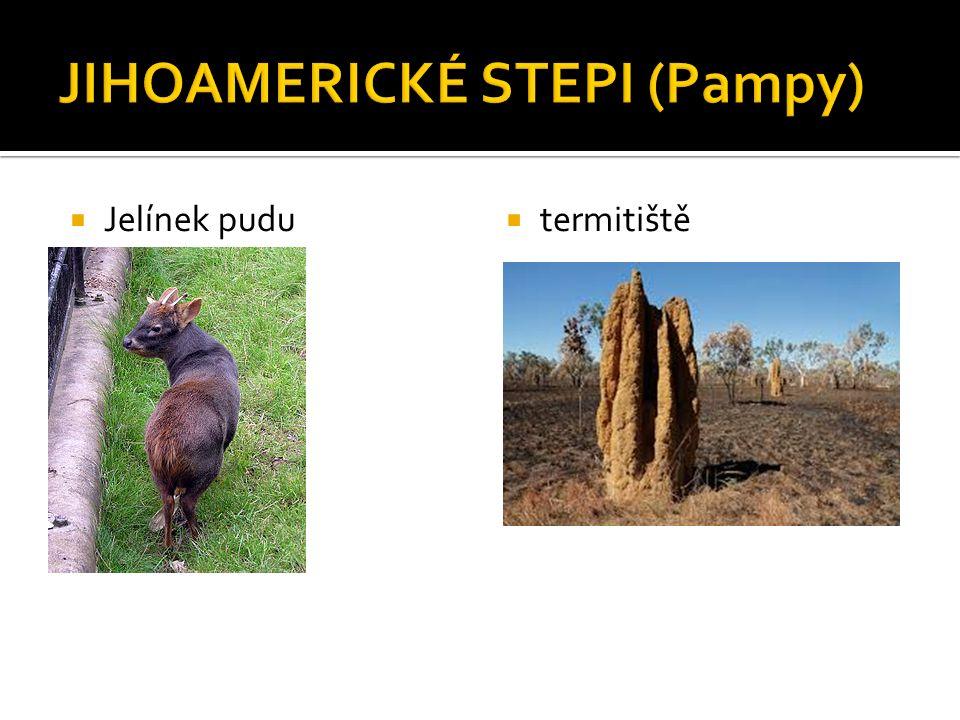  Jelínek pudu  termitiště