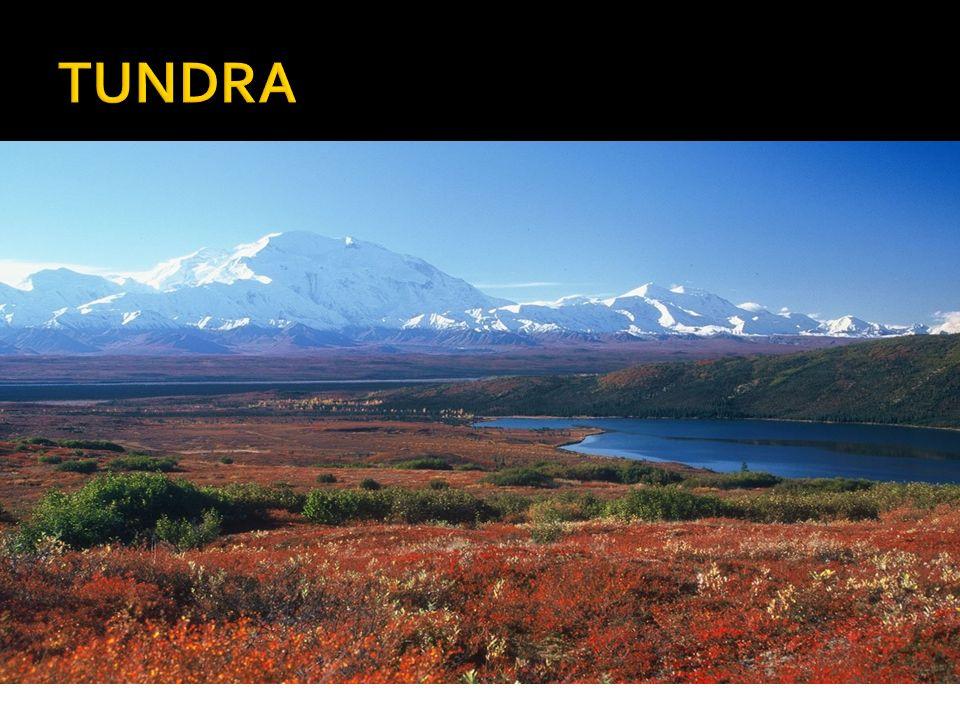  drsné klima (nízké teploty po celý rok)  Slovo tundra pochází z laponštiny a označuje bezlesou krajinu  dlouhá zima (až ¾ roku)  průměrné roční teploty -13 až -5 ºC  na severu Ameriky a v Grónsku Inuité (nesprávně Eskymáci)  permafrost  permafrost – tzv.