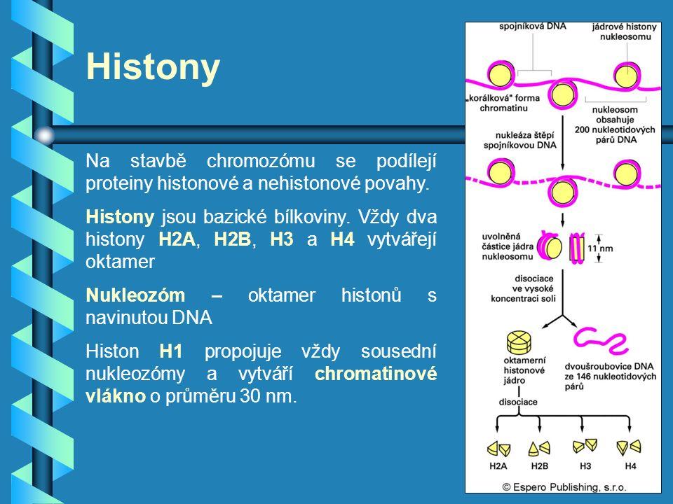 Histony Na stavbě chromozómu se podílejí proteiny histonové a nehistonové povahy. Histony jsou bazické bílkoviny. Vždy dva histony H2A, H2B, H3 a H4 v