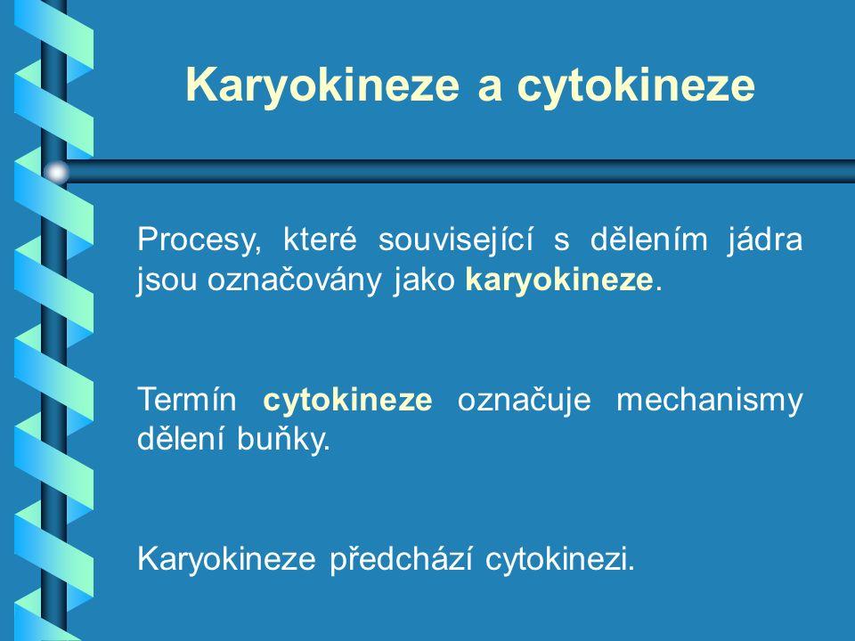 Karyokineze a cytokineze Procesy, které související s dělením jádra jsou označovány jako karyokineze. Termín cytokineze označuje mechanismy dělení buň