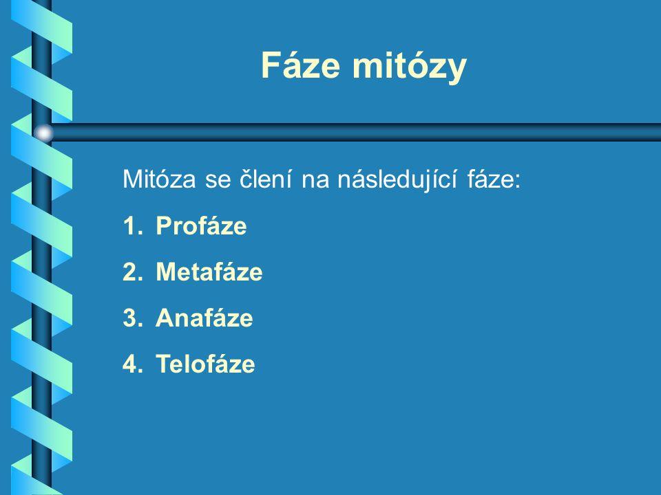 Fáze mitózy Mitóza se člení na následující fáze: 1.Profáze 2.Metafáze 3.Anafáze 4.Telofáze