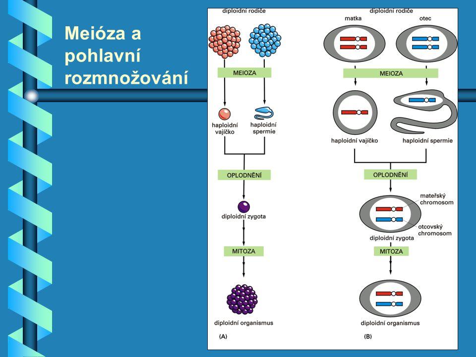 Meióza a pohlavní rozmnožování