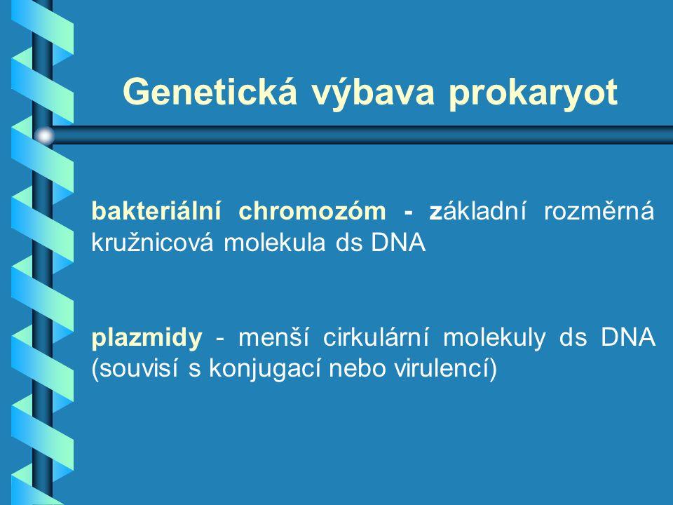 Genetická výbava prokaryot bakteriální chromozóm - základní rozměrná kružnicová molekula ds DNA plazmidy - menší cirkulární molekuly ds DNA (souvisí s