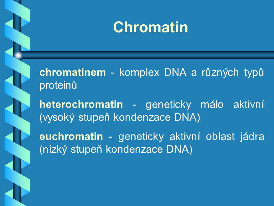 Organizace jaderného genomu DNA geny chromozómy jádro