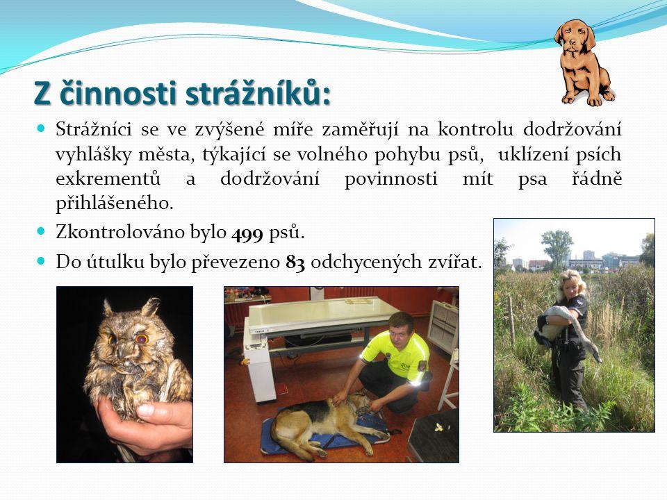 Z činnosti strážníků: Strážníci se ve zvýšené míře zaměřují na kontrolu dodržování vyhlášky města, týkající se volného pohybu psů, uklízení psích exkr